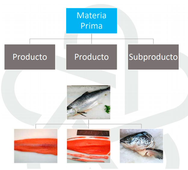Despiece y Clasificación - Premium Food - Integran